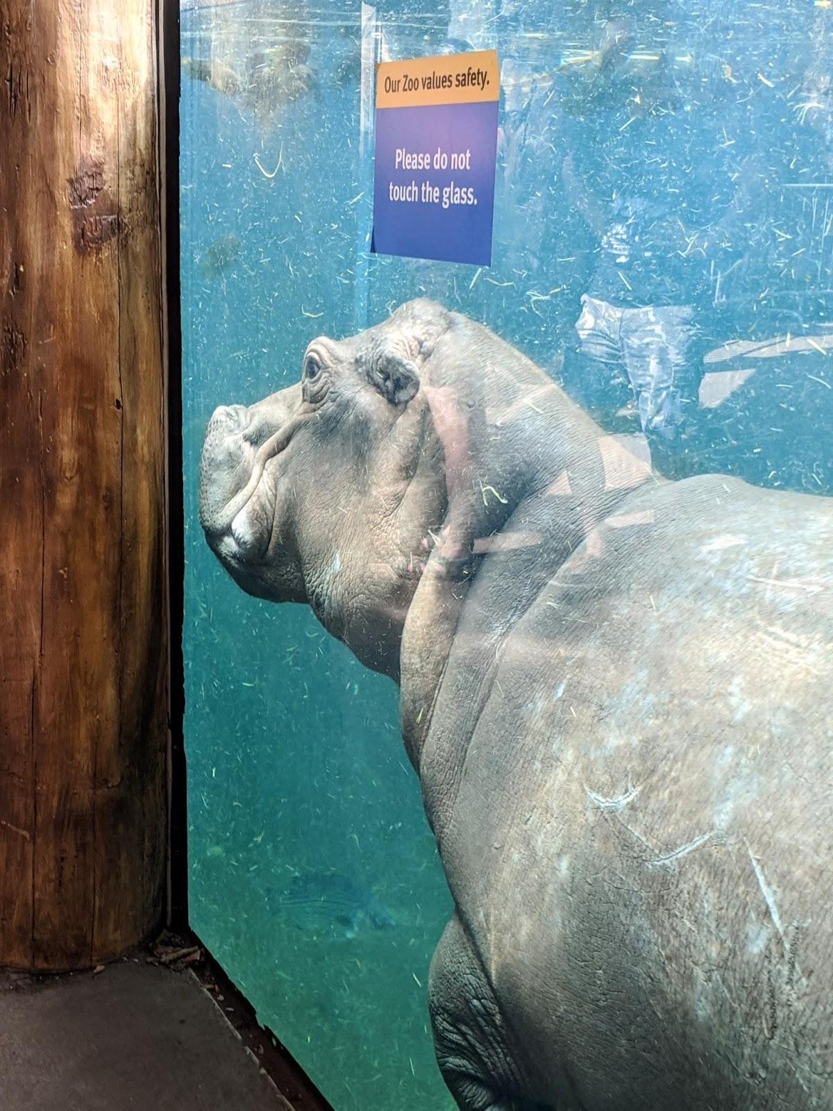 St. Louis free zoo